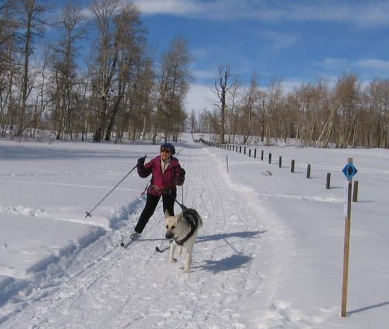 Jill McAlice and Otzi practice skijoring on Hwy 819 trail in February